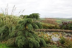 Ken Caro Garden